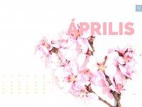 masni_apr_4-3